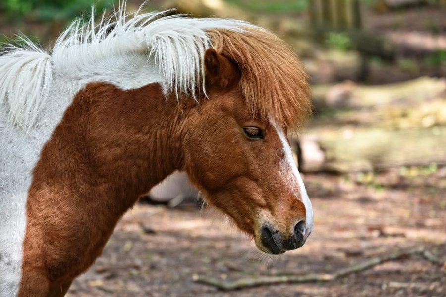 pferde-bild
